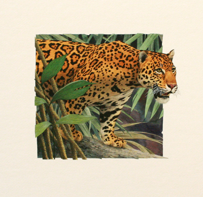 JAGUAR, PAUL KRATTER