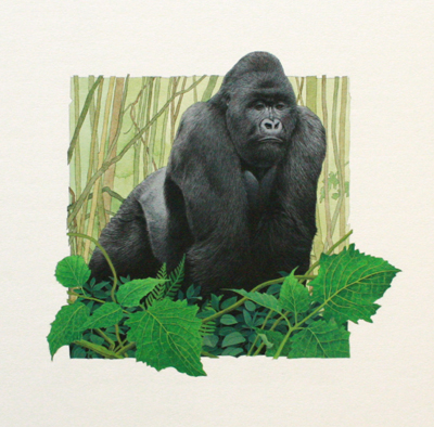 MOUNTAIN GORILLA, PAUL KRATTER