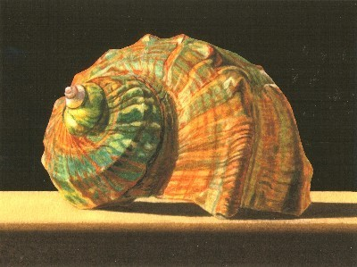 JOHN ARBUCKLE - NEW TURBAN SHELL - ARCHIVAL PRINT - 9.5 X 6.5