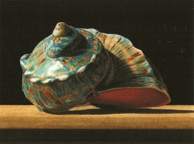 JOHN ARBUCKLE - TURBAN SHELL - ARCHIVAL PRINT - 9.5 X 6.5
