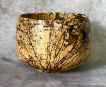 TOM BORUSKY - SPALTED HACKBERRY BOWL - WOOD - 4 X 4 X 3