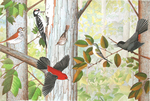 S.D. SCHINDLER - WOODLAND BIRDS - WATERCOLOR - 18 X 12